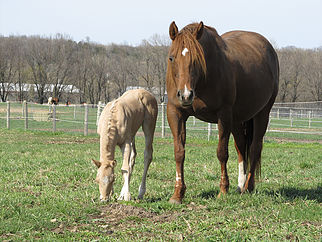 Foal-Season Ready!