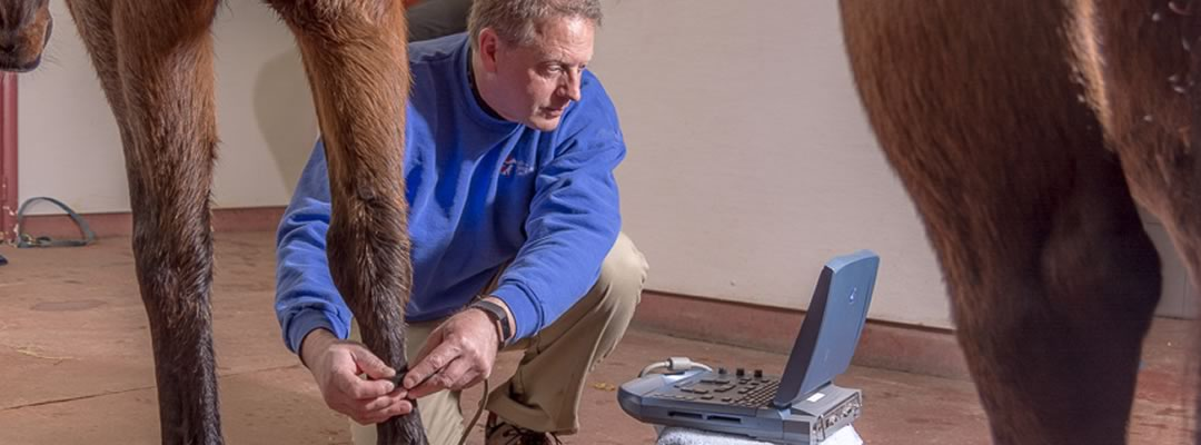 Lodi Vet Equine Veterinary Hospital Wisconsin