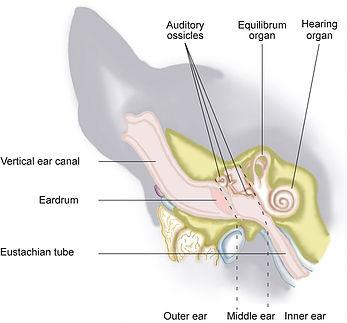 Vestibular Disease