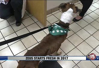 Zeus Gets a Second Chance