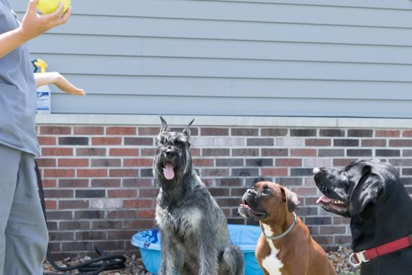 Pet Boarding and Daycare in Wiscsonsin