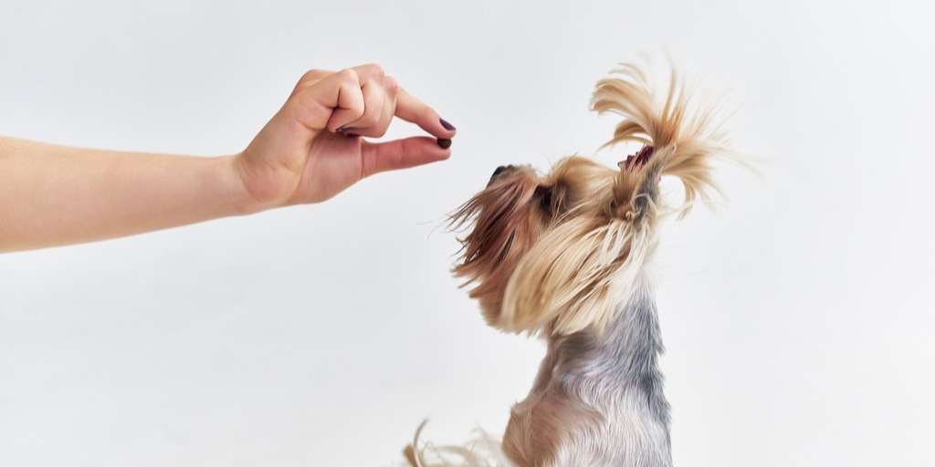 Heartworm disease is on the rise in our area – keep your pets protected!