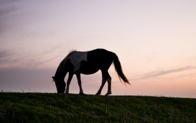 Why your veterinarian should be the one vaccinating your horses