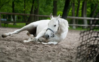Colic – What does the vet mean?